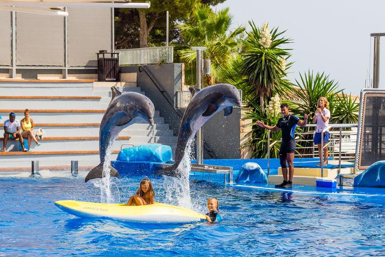 Teamwork Swimming Pool Water Water Park Summer Splashing Outdoors Exceptional Photographs EyeEm Best Shots Fun Blue Sea Aquarium Dolphin Travel Destinations Mallorca Malephotographerofthemonth Mallorcaphotographer Marineland Animal Themes