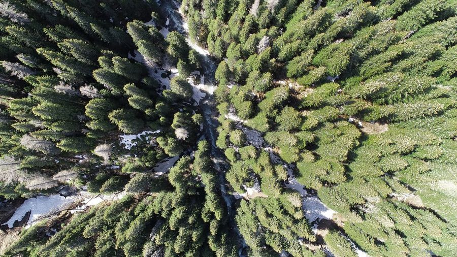 Aerial Photography Picea Abies River Aerial View Summer Exploratorium Backgrounds Full Frame Pattern Sunlight Close-up Green Color Blooming Plant Life Fragility Botany