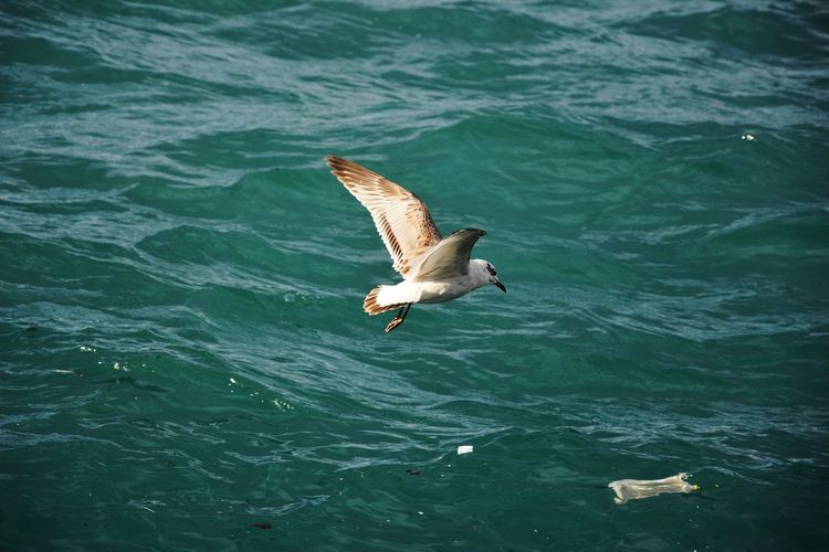 Garbage Trash Bird Water Spread Wings Flying Sea Sea Life Mid-air Fishing Waterfront Seagull Plastic Environment - LIMEX IMAGINE Plastic Environment - LIMEX IMAGINE