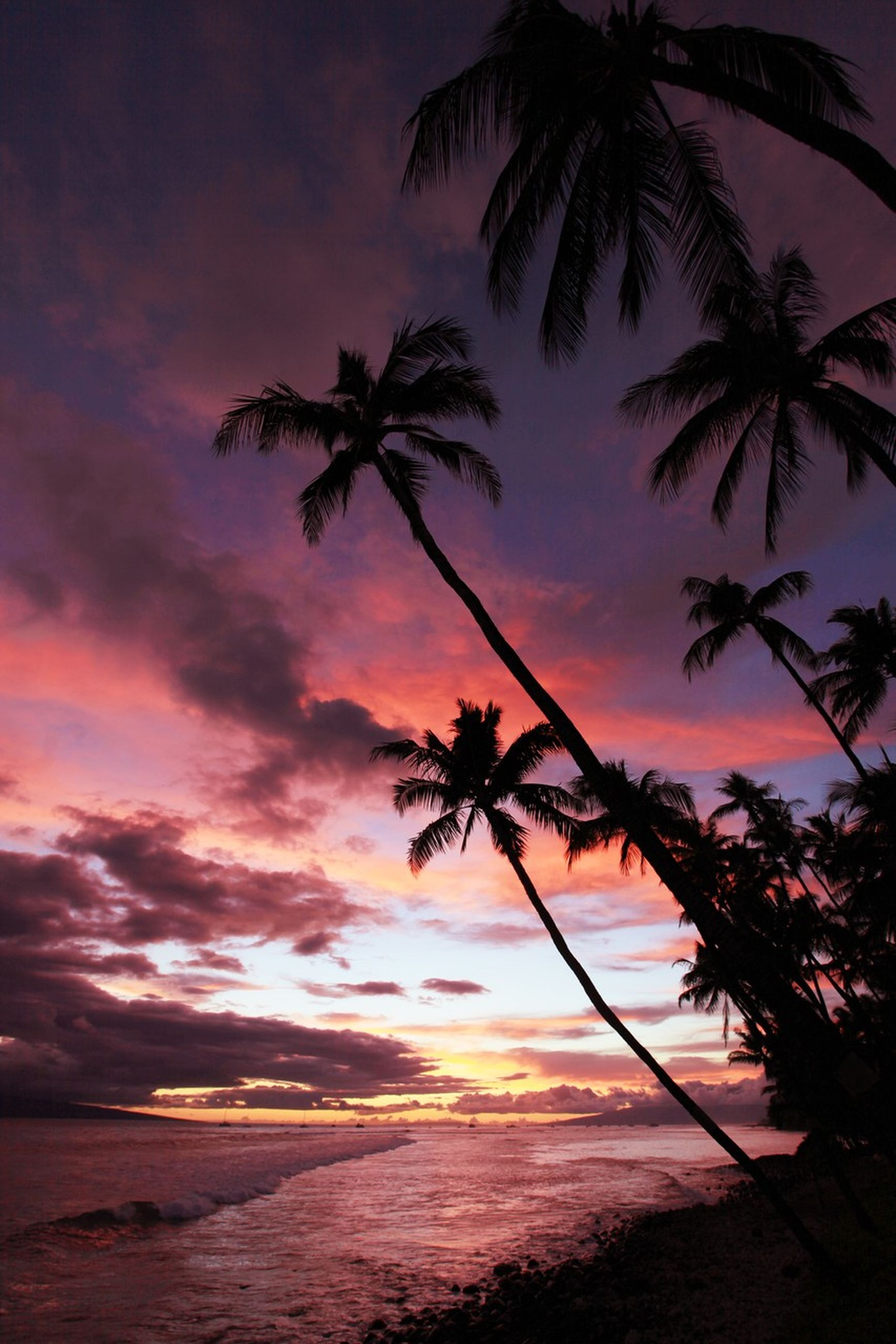 palm tree, sunset, tree, sky, tranquility, scenics, beauty in nature, tranquil scene, silhouette, sea, nature, cloud - sky, beach, idyllic, orange color, growth, horizon over water, water, dramatic sky, cloud