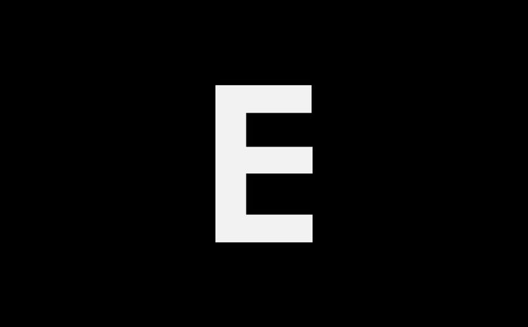Toddler boy looking up against bare tree trunks in forest