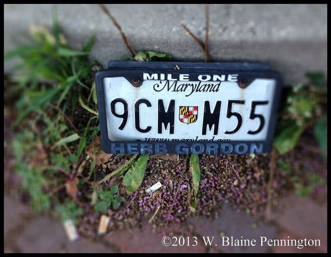Herb couldn't quite make mile 2 Lost License_plate Street By The Curb