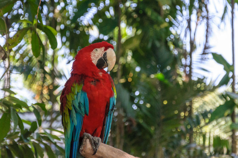 Low angle view of parrot perching on tree