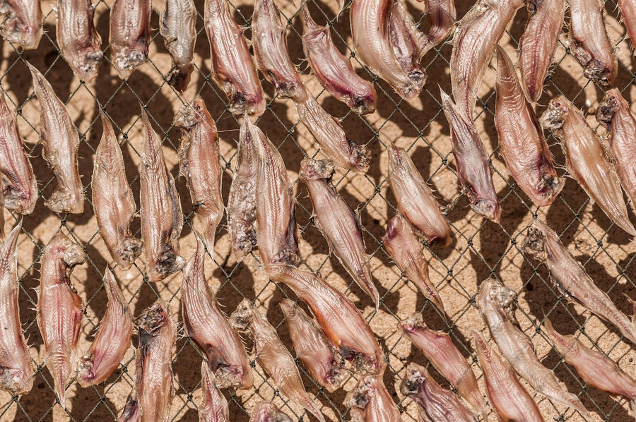 Abundance Animal Backgrounds Dry Dryed Fish Fish Fish Market Fishing Industry Food Food And Drink For Sale Freshness Healthy Eating High Angle View Large Group Of Objects Market No People Retail  Seafood Vertebrate Wellbeing