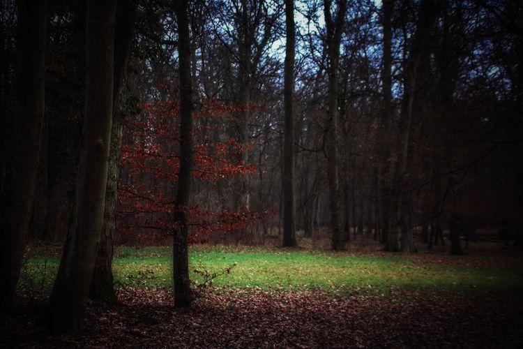 🌳🍁Die Buche🍁🌳 Ganz verborgen im Wald kenn' ich ein Plätzchen, da stehet eine Buche, man sieht schöner im Bilde sie nicht. Rein und glatt, in gediegenem Wuchs erhebt sie sich einzeln, Keiner der Nachbarn rührt ihr an den seidenen Schmuck. Rings, so weit sein Gezweig der stattliche Baum ausbreitet, grünet der Rasen, das Aug still zu erquicken, umher; gleich nach allen Seiten umzirkt er den Stamm in der Mitte; kunstlos schuf die Natur selber dies liebliche Rund. Zartes Gebüsch umkränzet es erst; hochstämmige Bäume, folgend in dichtem Gedräng, wehren dem himmlischen Blau. Neben der dunkleren Fülle des Eichbaums wieget die Birke ihr jungfräuliches Haupt schüchtern im goldenen Licht. Nur wo, verdeckt vom Felsen, der Fußsteig jäh sich hinabschlingt, lässet die Hellung mich ahnen das offene Feld.. (Diese wunderbaren Zeilen schrieb Eduard Mörike, 1804-1875) Beauty In Nature Darkness And Light Eye4nature Eye4photography  EyeEm Best Shots - Nature EyeEm Gallery EyeEm Nature Lover Feel The Nature Forest Forest Photography Forest Trees In The Forest Ladyphotographerofthemonth Nature Nature Photography Naturelovers One With Nature Poetry In Pictures Take A Walk Tranquil Scene Tranquility Untamed Heart Waiting For Spring We Are Nature WoodLand