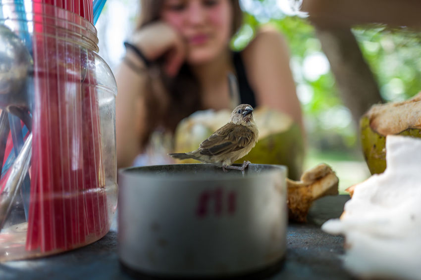 small bird on table with people Adult Animal Wildlife Bird Container Day Drink Food Food And Drink Glass Group Of Animals Indoors  People Real People Refreshment Selective Focus Table Vertebrate