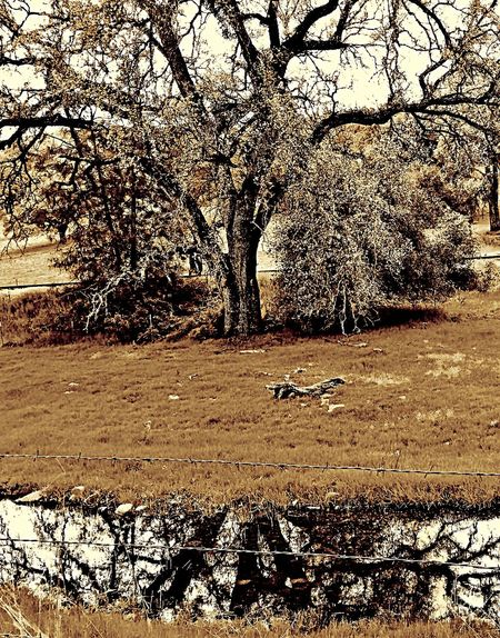 OpenEdit EyeEm Nature Lover EyeEmBestEdits EyeEm Gallery Trees TreePorn EyeEm Best Edits Black & White Eye4black&white  Blackandwhite