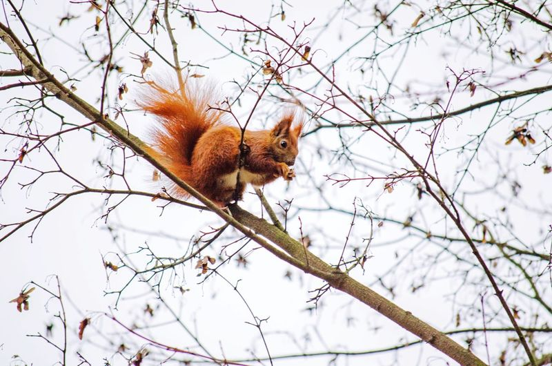 Low Angle View Of Squirrel Sitting On Branch Against Sky