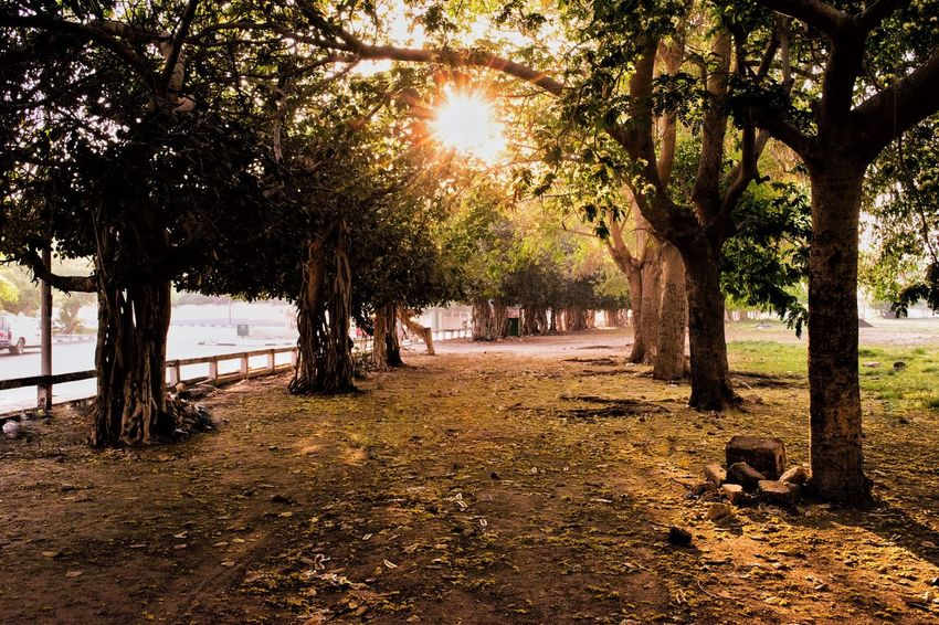 Sunlight Tree Trunk Tree Outdoors Nature Beauty In Nature Day Beauty In Nature Ismailia The Great Outdoors Beutiful  ismailia number 6