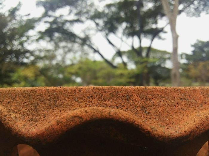 Longsighted Focus On Foreground Tree Close-up Nature Outdoors Long Longsight Pot Brick