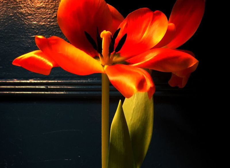 Flower Orange Color Petal Blooming Close-up No People Nature Pollen Indoors  Flower Arrangement Vase Of Flowers Still Life Copy Space The Still Life Photographer - 2018 EyeEm Awards