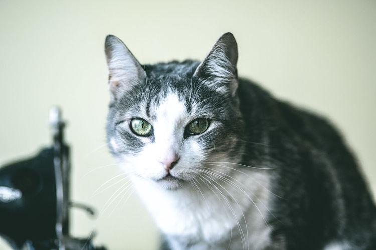 Close-up of cat outdoors