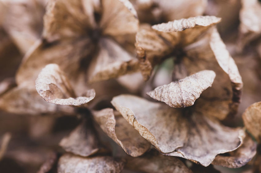 autumnal nature Backgrounds Beauty In Nature Brown Close-up Cold Temperature Day Dried Dry Focus On Foreground Fragility Full Frame Leaf Leaves Nature No People Plant Plant Part Selective Focus Vulnerability  Wilted Plant Winter