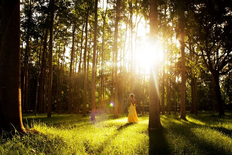 At peace Goodmorning EyeEm  Lady Tree Plant Sunlight Forest Land Nature Beauty In Nature WoodLand Sunbeam Lifestyles Lens Flare Tranquility