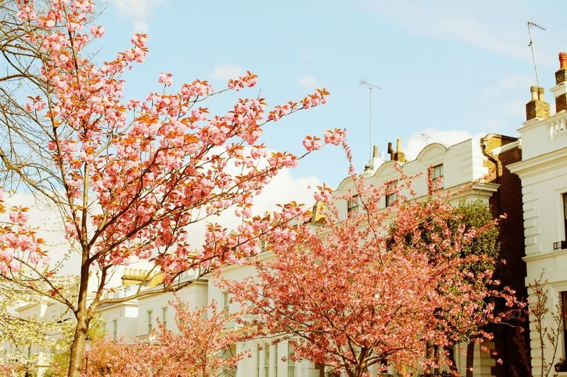Pretty In Pink Notting Hill London Spring Flowers