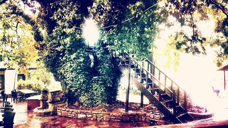 Taking Photos Hello World Relaxing Daydreaming Dark Darkness And Light Renkritmi Bahçe Ve Huzur Huzur Garden Colour