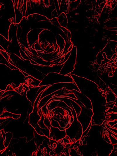 Happy 🌞Day😘🙋🏼♀️ Roses🌹 My Artistic Expression ExpressYourself For My Friends 😍😘🎁 Love Is In The Air ♥ Edited My Way I Did It My Way Red Abstract Black Background Close-up