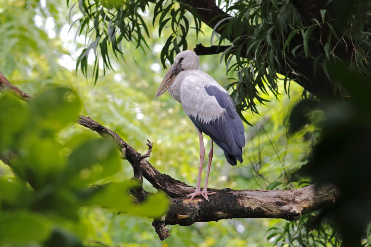 Animal Wildlife Animals In The Wild Bird Tree Plant Animal Themes Vertebrate Animal One Animal Perching Branch No People Heron Day Nature Gray Heron Focus On Foreground Low Angle View Growth Outdoors