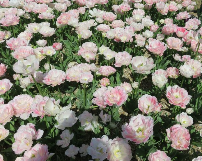 はな 花 はな 植物 自然 白