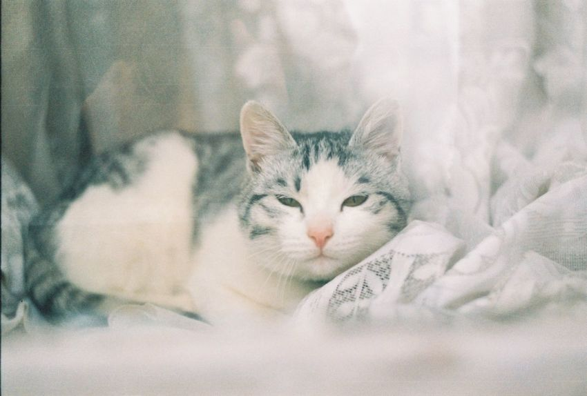 35mm Alertness Animal Body Part Animal Eye Animal Head  Cat Close-up Domestic Animals Domestic Cat Feline Focus On Foreground Kitten Lying Down Mammal Nature No People Pets Portrait Relaxation Resting Selective Focus Staring Whisker