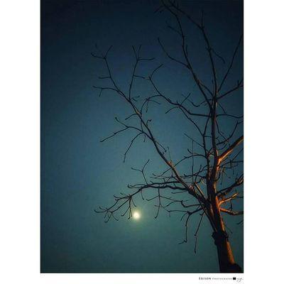 【 枯枝晚安 】 牽手走過的枯木 形成強烈的對比 拉近拉遠 低頭仰望 矛盾中卻有的自然 也許真該學習 如何看見彼此的不同 對眼相看 同情 同一視角 同理 簡單 卻不容易行 LGG4 手機攝影 Lonely Tree Night 365Snap