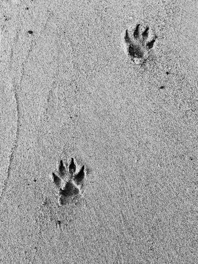 High Angle View Of Paw Prints On Sandy Beach