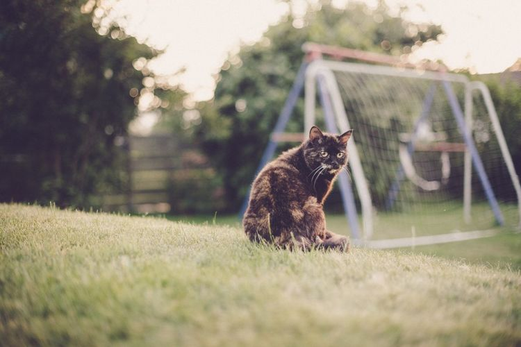 Garden Bokeh EyeEm Selects Domestic Cat Feline Pets Cat Mammal Domestic Animals Grass One Animal Sitting Outdoors Animal Themes No People Day Nature