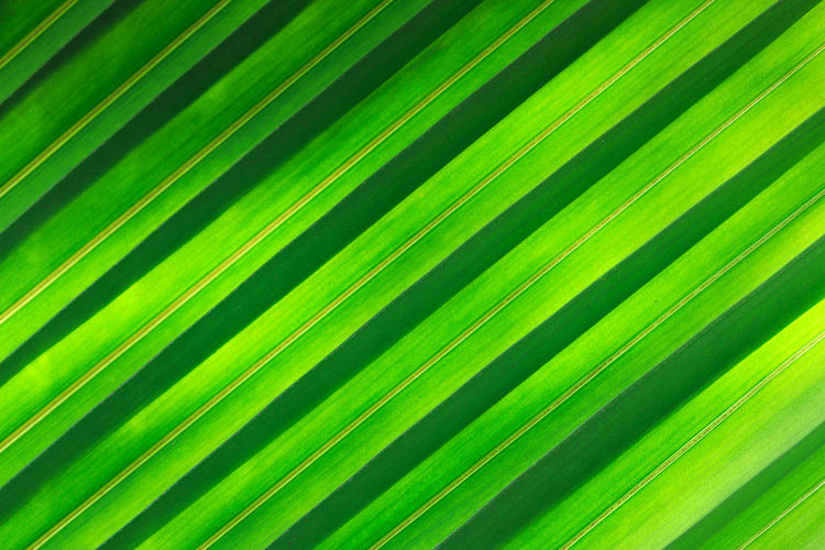 Green leaf background Textute Leaf Landscape Leaf Background Green Natural Pattern Leaf Vein Leaves Young Plant Greenery