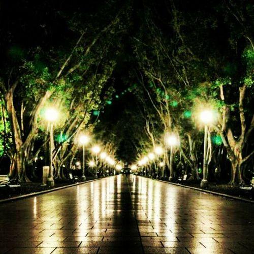 The walkway through Hyde park Sydney. Sydneyinsty Sydney Canon City park trees lights reflection path walkway igers ig23 instaboss instalove photography photooftheday picoftheday bestoftheday night eos followme followbackteam followback follow teamfollowme teamfollowback @sydneyinsty