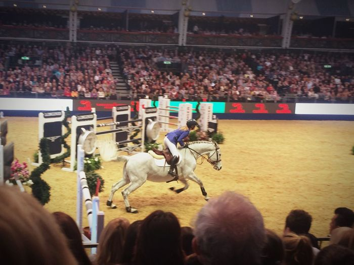 Horse Horse Riding Olympia Competition