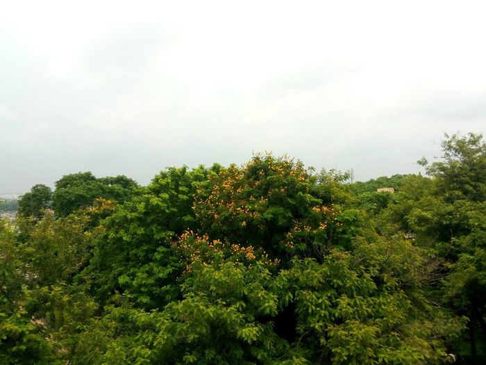 Heyyyy, Relaxing Taking Photos Yellow Flowers Cloudy Day Terrace View But Still A Lot To See In Nagpur,India