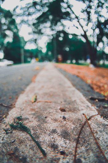ตรงไป Plant No People Nature Tree Day The Way Forward Direction Falling Autumn Road Outdoors Plant Part Leaf Close-up Transportation Focus On Foreground Change Diminishing Perspective Footpath Sunlight