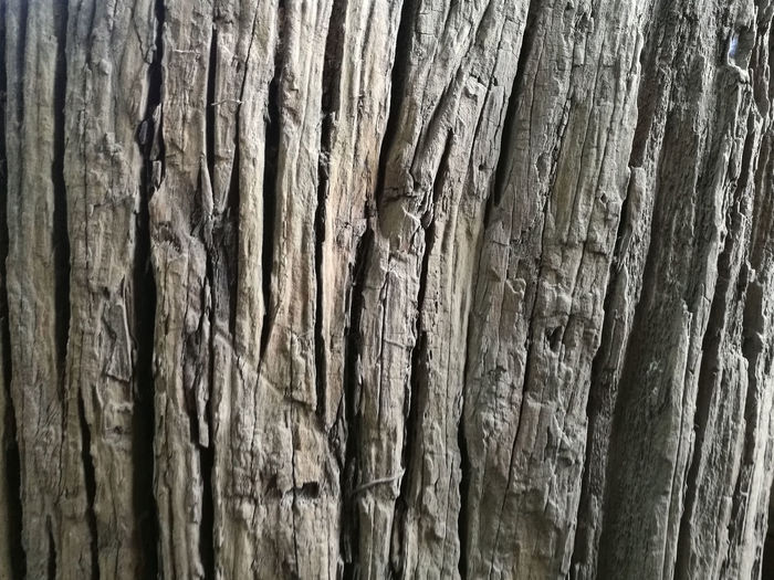 Backgrounds Bark Close-up Cracked Day Full Frame Natural Condition Natural Pattern Nature No People Outdoors Pattern Plant Plant Bark Rough Textured  Textured Effect Tree Tree Trunk Trunk Weathered Wood Wood - Material Wood Grain