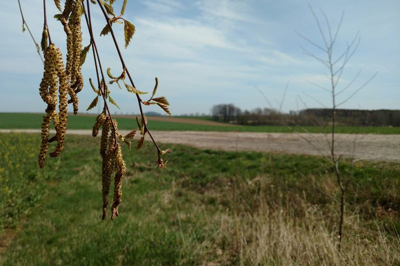 Plants growing on field against sky