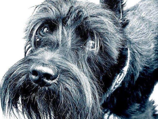 Dog Bw Blackandwhite Portrait Sadness Sadeyes Bnw
