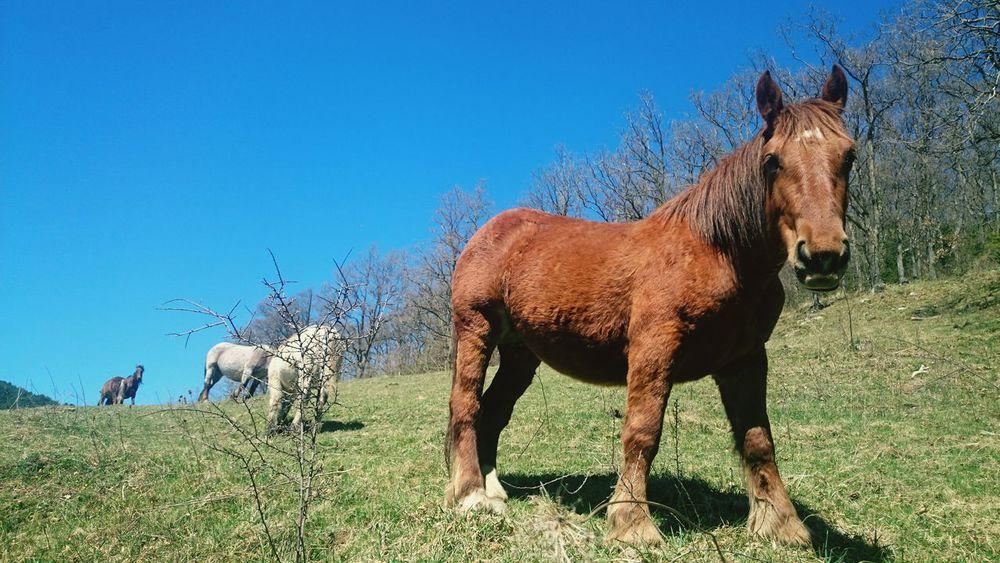 Protecting Where We Play Nature Wildlife Wildlife & Nature Wildhorses Pirineos