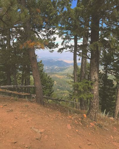 Hiking Tree Forest Nature Landscape Scenics Tree Trunk WoodLand Pine Tree Beauty In Nature Outdoors Mountain Sky Colorado Boulder Rocky Mountains