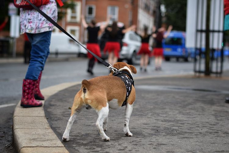 Low section of dog walking on street