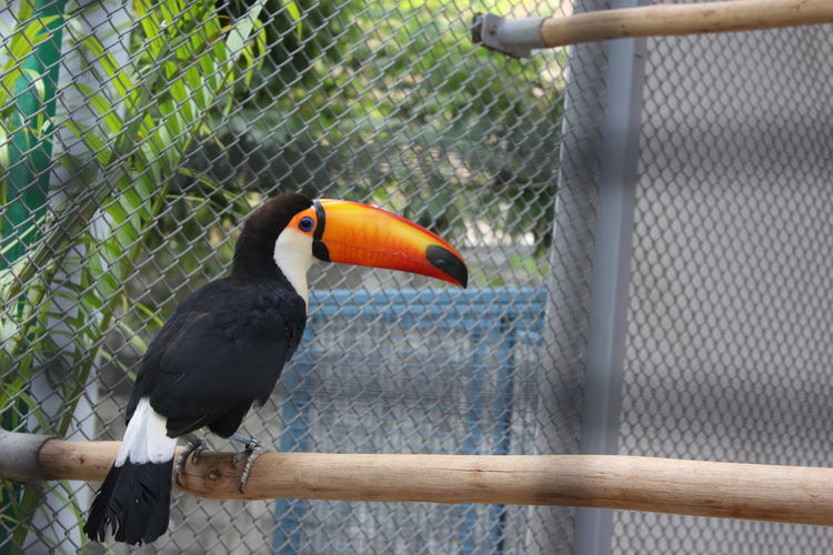 Make me Free..Animal Themes Animals In The Wild Beak Beauty In Nature Bird Birdspark Day Filmcity Focus On Foreground Hornbill Nature One Animal Outdoors Perching Railing Wildlife Canonphotography Canon 18-55