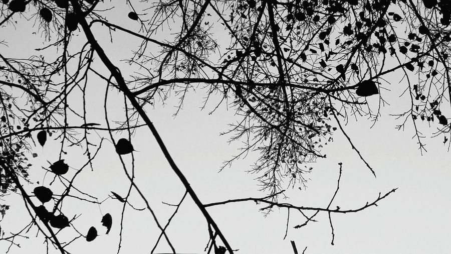Tree Branch Nature No People Bare Tree Growth Sky Tranquility Day Close-up Beauty In Nature Freshness Neweyeem EyeEmNewHere Spotted NewEyeEmPhotographer Like4like NewHere ✌🏽️😄 Magical Trees Myth Tree Barks Nature Love Black Welcome To Black