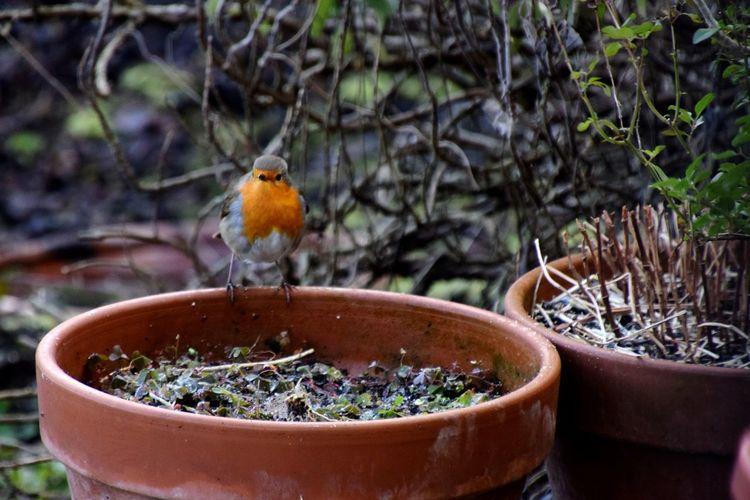 Close-up of bird in pot