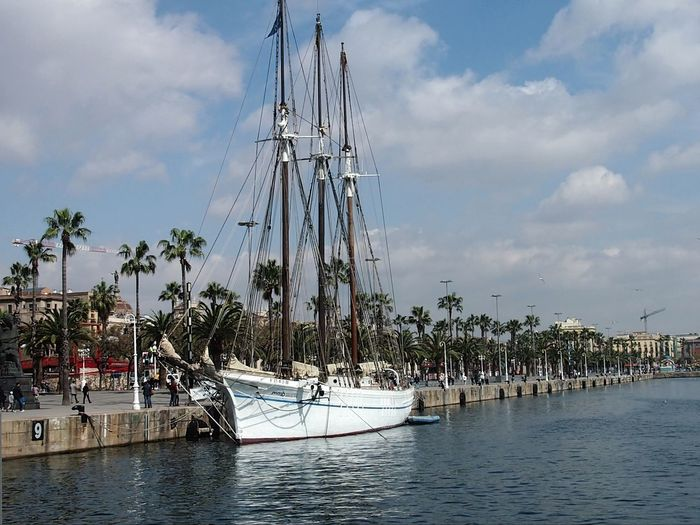Sail boat. Tree