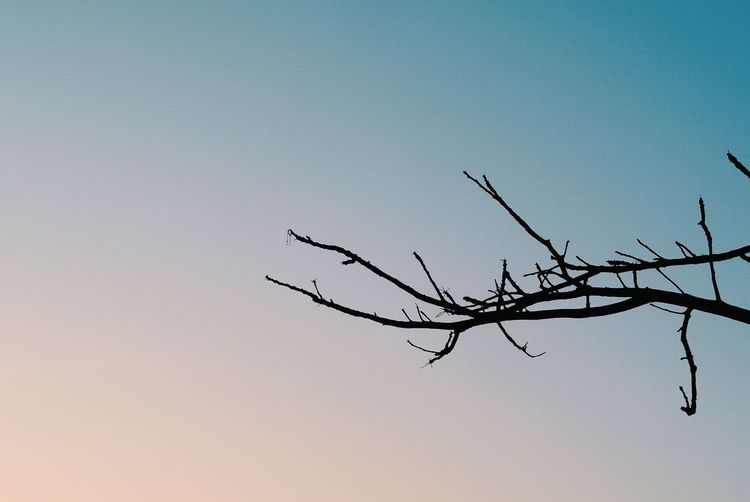 Clear Sky Nature Branch Bare Tree Low Angle View Beauty In Nature Tree Sky Outdoors First Eyeem Photo