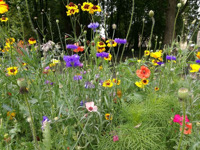 Wildflower verges right in the city centre. Beautiful Flower Beauty In Nature Petal Flower Head Wildflower