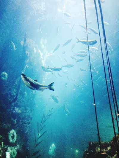 Fish Sea Underwater Fish Animal Themes Water UnderSea Swimming Sea Life Nature Animals In The Wild Large Group Of Animals School Of Fish Beauty In Nature Day No People Outdoors Aquarium Scuba Diving Deep Aquarium Life The Traveler - 2018 EyeEm Awards
