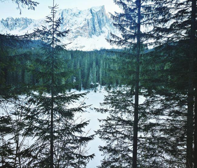 Carezza Lake Perfect View View Winter Lago Dolomiti Momentimagici Riflettendo Green Color Abeti No People Beauty In Nature Lake Sky