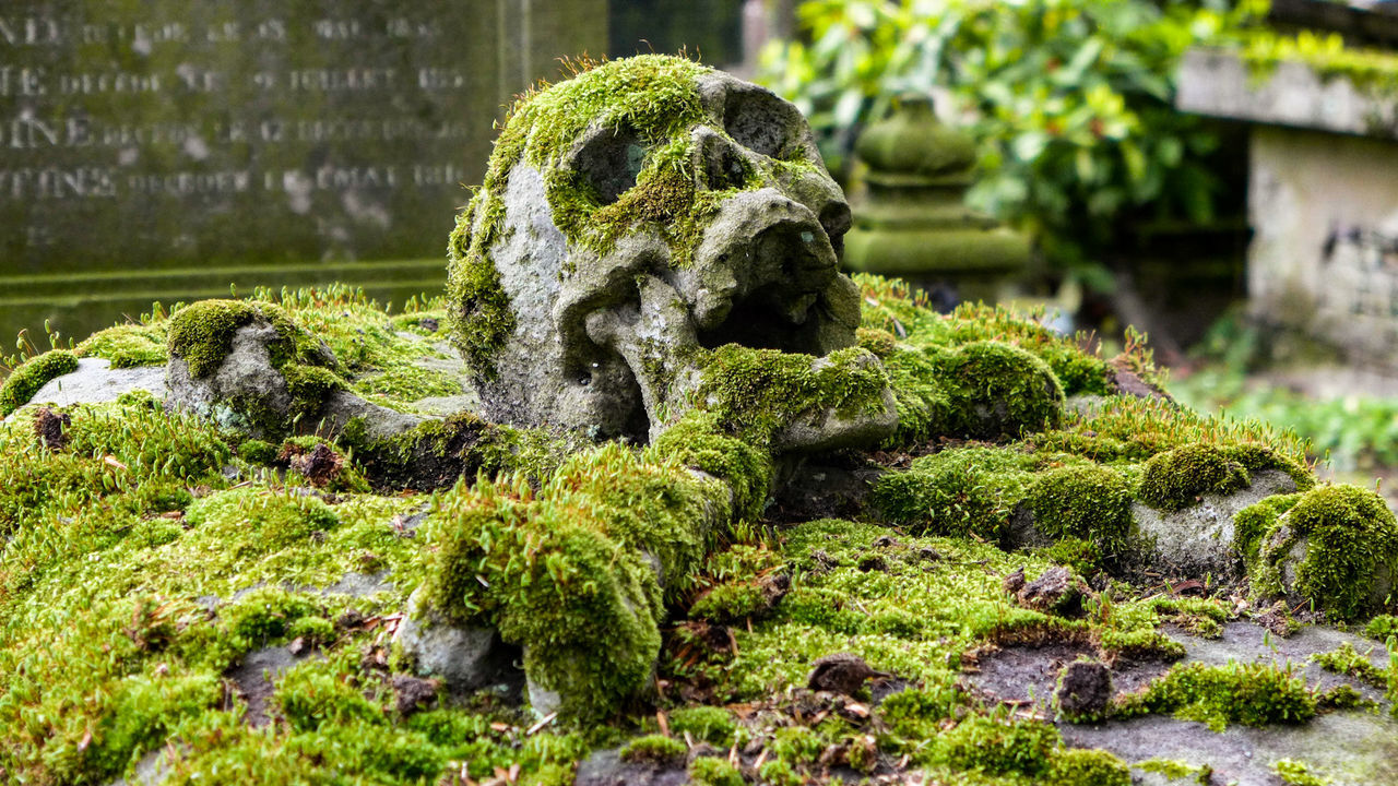 moss, no people, statue, day, sculpture, green color, outdoors, nature, gargoyle, close-up, water