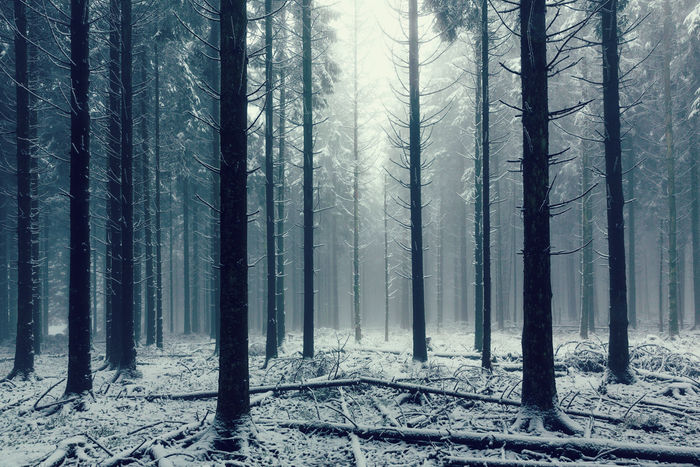 Misty forest in winter Beauty In Nature Deep In The Woods Foggy Foggy Morning Forest Frozen Nature Landscape Misty Mysterious Nature No People Outdoors Pine Tree Power In Nature Snow Tranquil Scene Tree Tree Trunk Vitality Wilderness Area Winter Winter Wonderland WoodLand