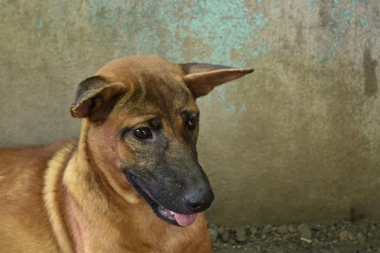 Close-up portrait of a dog