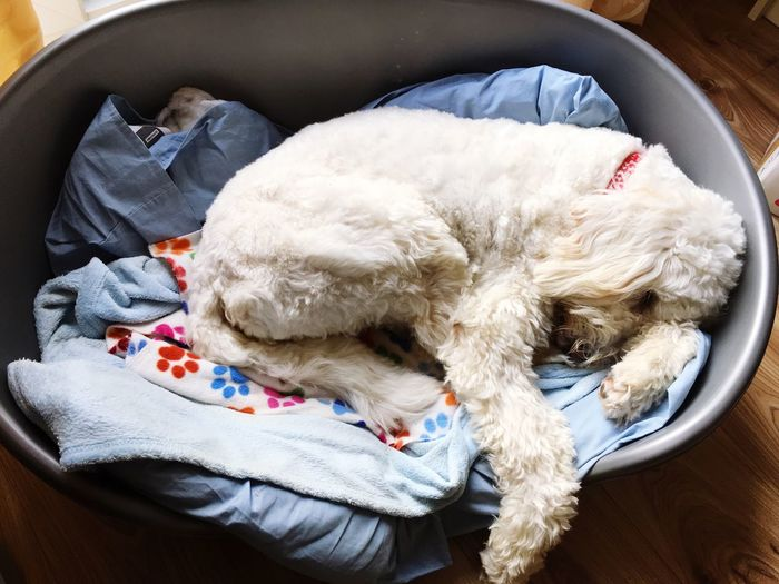 Quiet day at the office Relaxation Domestic Animals Pets Domestic Canine Resting Dog Indoors  Mammal High Angle View One Animal Animal Themes Bed Comfortable